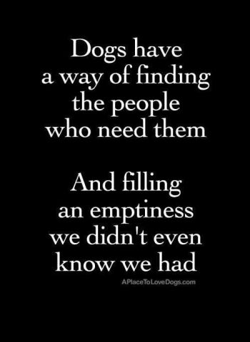 dogs heal