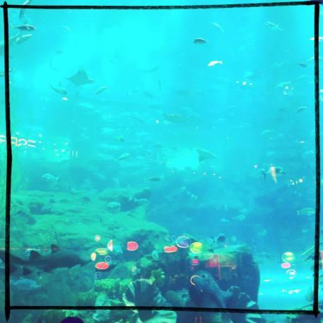 Aquarium, Dubai, 2013