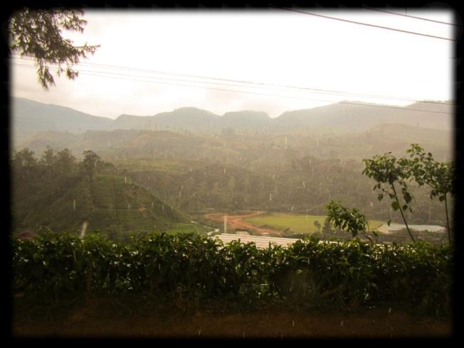 Rain & Tea, SriLanka