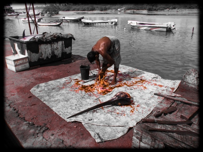 Fisherman gutting a fish. Trincomalee